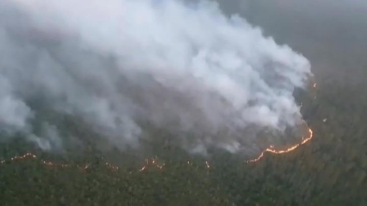Пожары в Якутии: Авиалесоохрана начинает взрывать лес, чтобы остановить огонь
