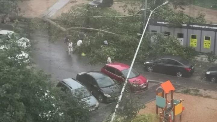 В Казани дерево упало на двух женщин и ребенка