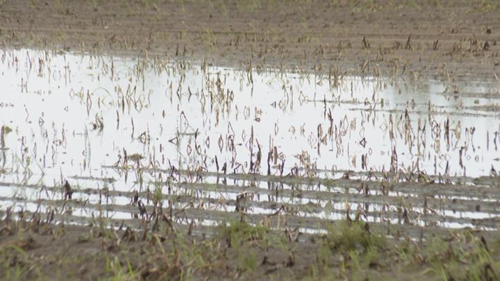 В Приамурье от паводка пострадали 43 тысячи гектаров посевов