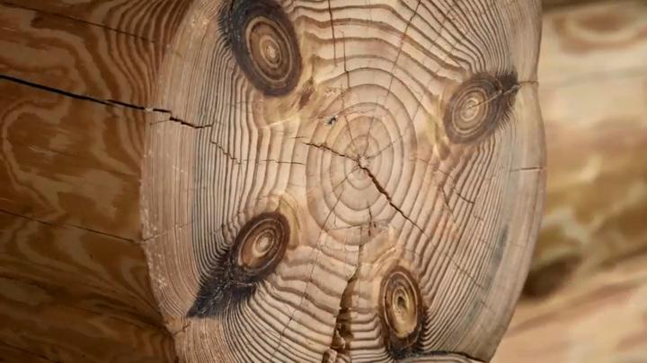 Погиб во время игры: в Башкирии на 5-летнего мальчика упал сруб дерева