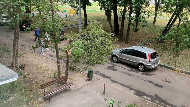 Шквалистый ветер повалил в Москве за сутки около 60 деревьев