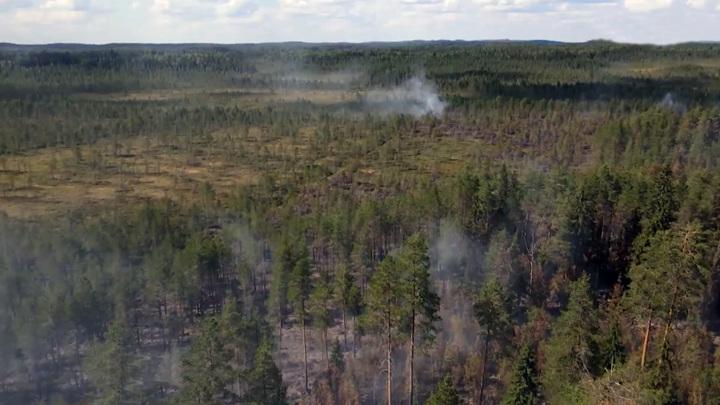 В Карелии введен режим ЧС из-за лесных пожаров