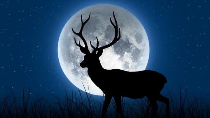 В небе над Новосибирском взойдет полная Оленья Луна