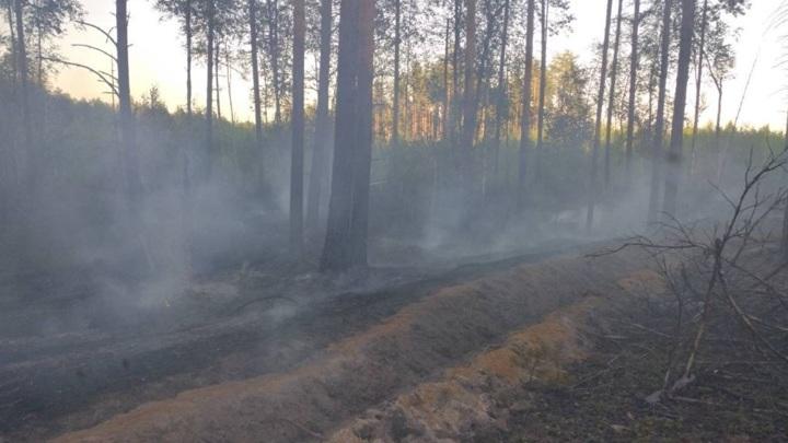В Ивановской области загорелся лес рядом с деревней
