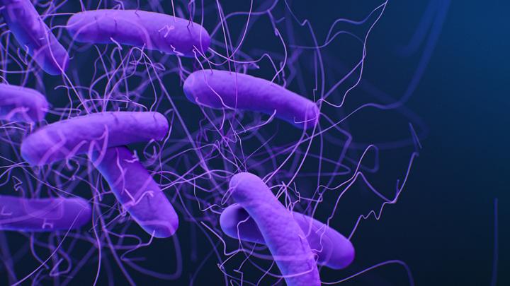 Это бактерия вида Clostridium difficile, которая вызывает тяжелую диарею и воспаление кишечника. Исследователи обнаружили, что кишечные микробы долгожителей сильно подавляют ее рост.