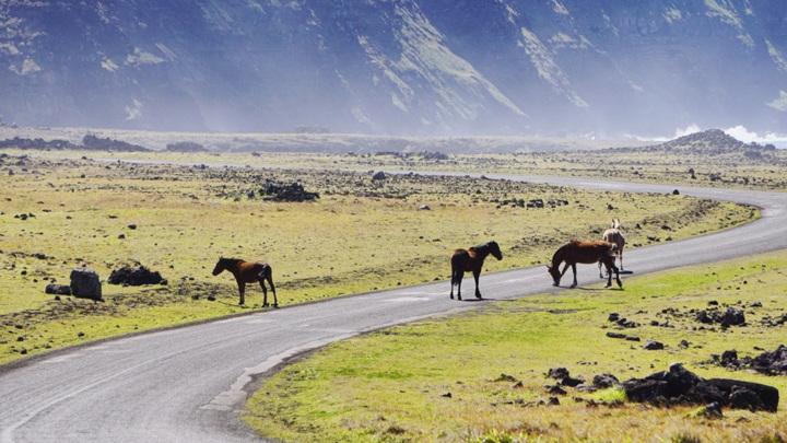 В Ингушетии столкновение автомобилей с лошадьми закончилось трагедией