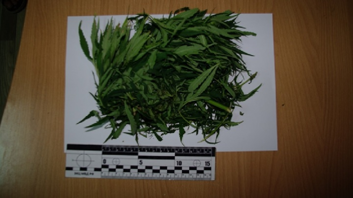 Полицейские задержали ельчанина с марихуаной