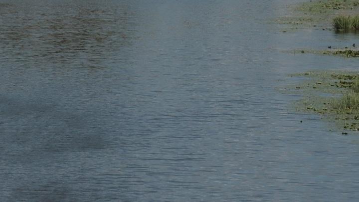 В Вологде неизвестный мужчина утонул в пруду