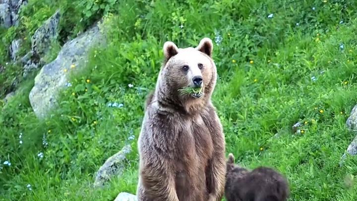 Для отпугивания медведей в Сочи устраивают шумовые прогоны