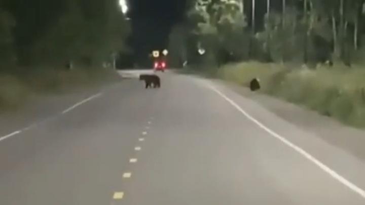 Медведей видели в одном из районов Камчатки несколько раз за день