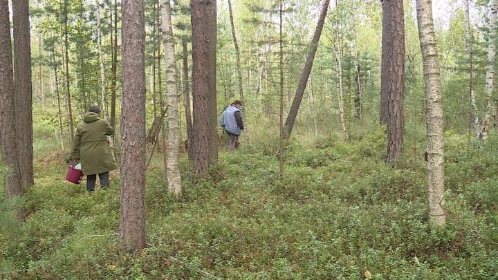 В лесах Орловской области в минувшие выходные заблудились четверо грибников