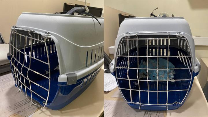 В московском аэропорту Домодедово пропала собака, которую сдали в багаж