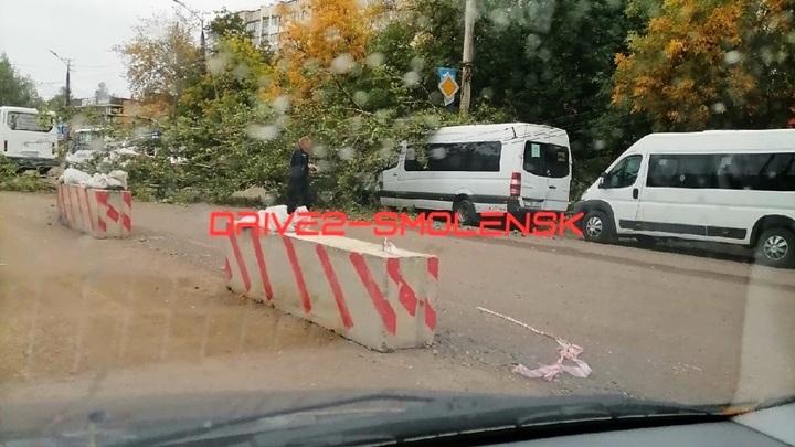 В Смоленске на маршрутку упало дерево