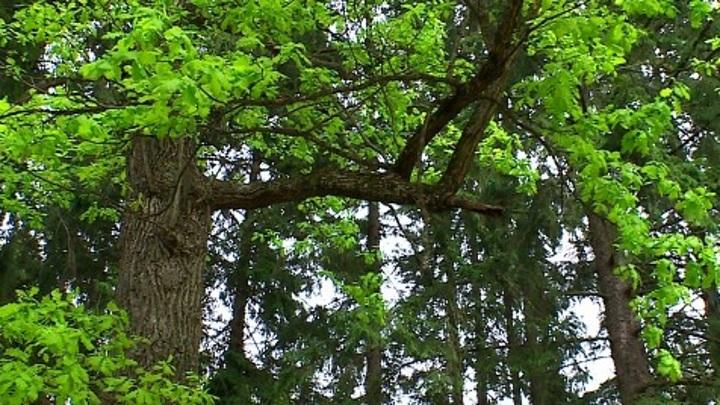 Калужская область вошла в топ-10 национального эко-рейтинга