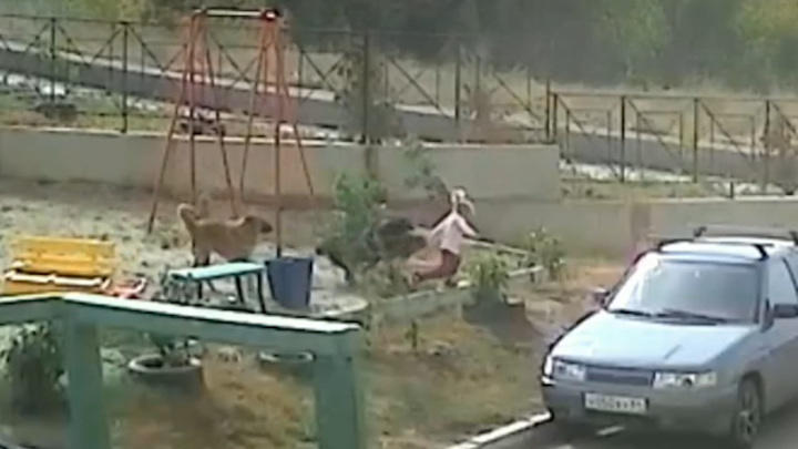 На администрацию Саратова возбудили дело после нападения собак на ребенка