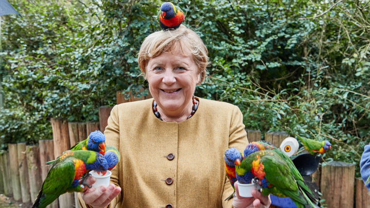 Меркель укусил попугай лори
