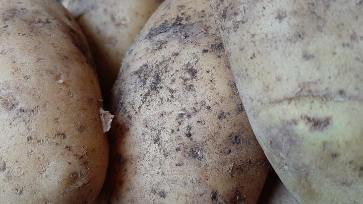 Две закадычные подруги украли у фермера 120 кг картошки