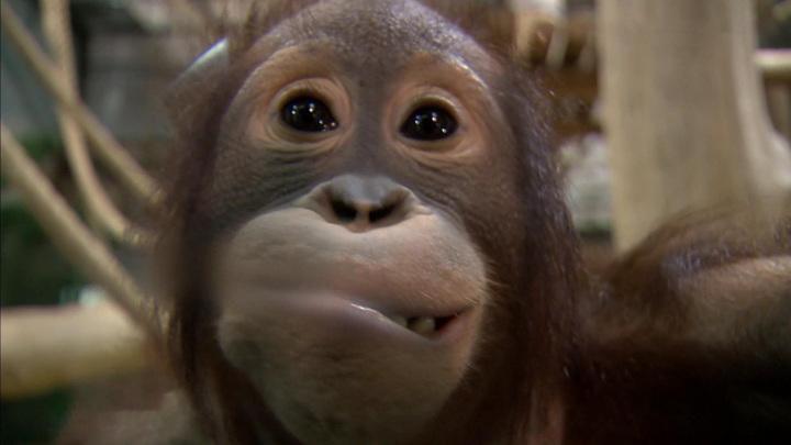 Гнездо из одеял: посетители зоопарка несут пледы замерзающим обезьянам