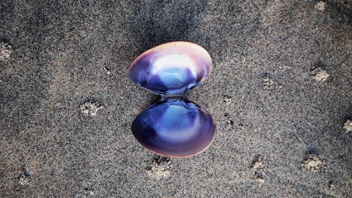 Перламутр состоит из кристаллов карбоната кальция, расположенных слоями, подобно кирпичикам в кладке.