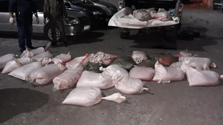 Полицейские на Камчатке изъяли у автомобилиста более 1 тонны красной икры