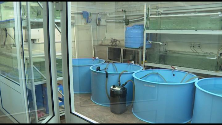 """Ученые нашли """"суррогатную мать"""" для ценных видов рыб Байкала"""