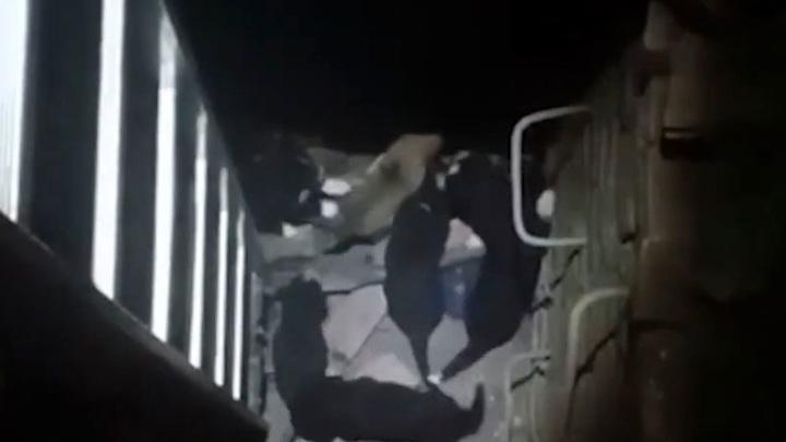 В Башкирии спасатели вызволили из колодца девять щенков