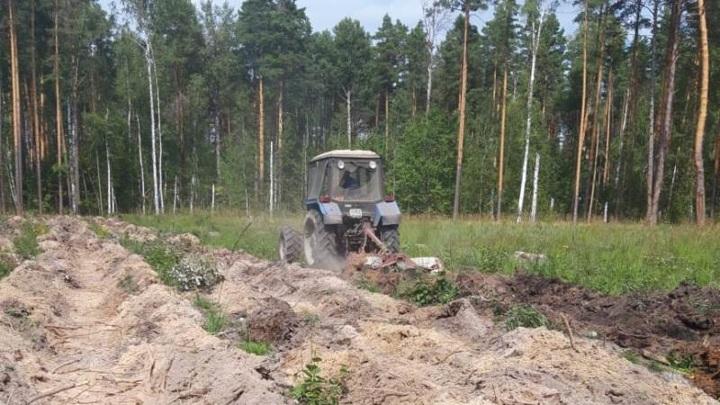 Свыше тысячи гектаров леса посадят в Тамбовской области