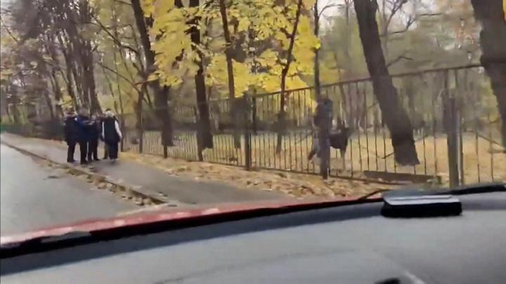 Стрельба из страйкбольного ружья: что делал подросток возле школы