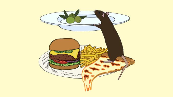 """Последствия неправильного питания на протяжении всей жизни можно смягчить, периодически соблюдая своеобразный """"пост""""."""