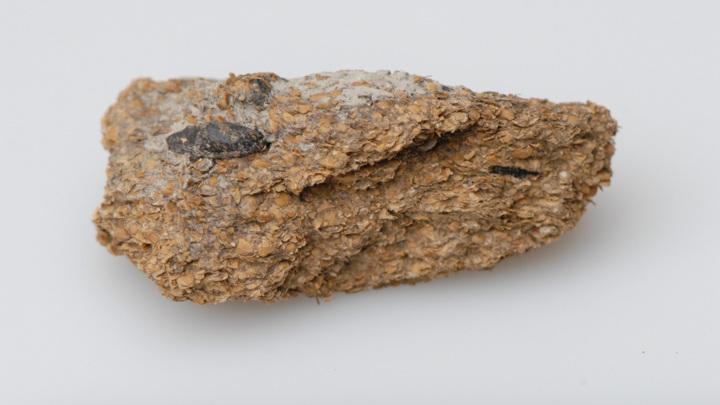 Копролит из солевых шахт Гальштата, в котором отчётливо видны составляющие бобов, ячменя и проса.