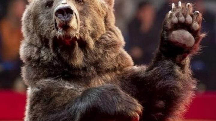 В цирке Орла медведь напал на дрессировщицу
