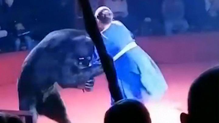 Медведь напал в цирке на беременную девушку