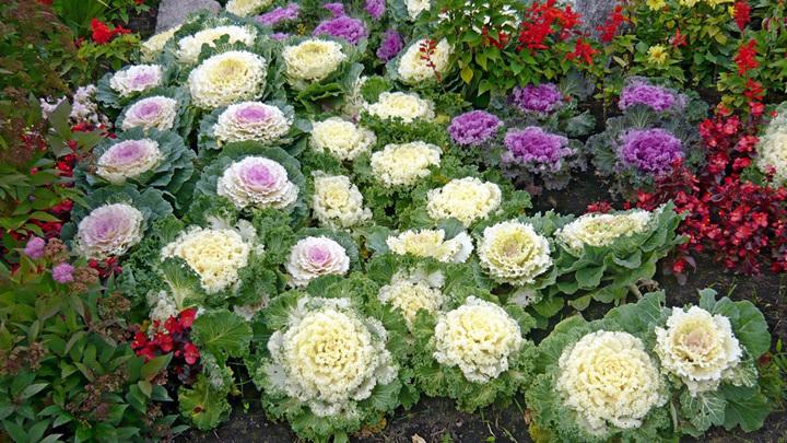 360 тысяч сезонных растений высадят на курорте в Сочи