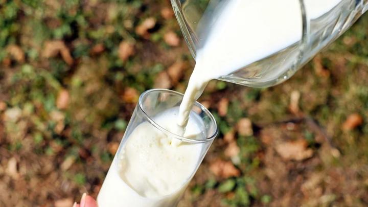 В Тверской области производили молоко с кишечной палочкой