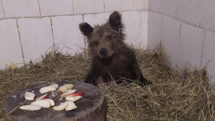 В Челябинске лечат маленькую медведицу
