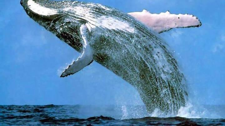Несколько человек пострадали при столкновении парома с китом